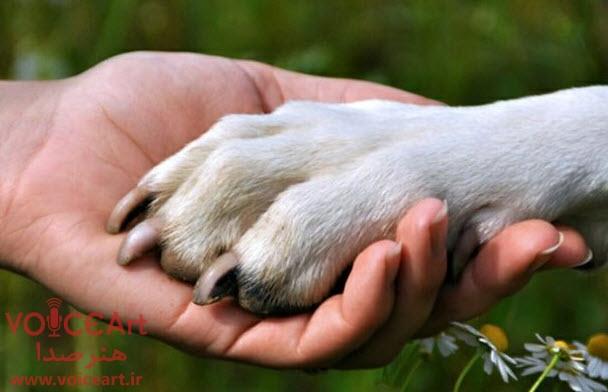 شوخی با کارمند سازمان حمایت از حیوانات در «عصر صبا»